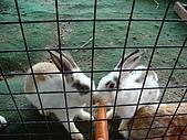 乳牛的家:可愛兔子區.2