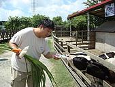 乳牛的家:小牛區.3