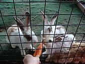 乳牛的家:可愛兔子區.3
