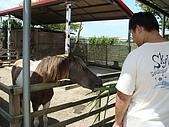 乳牛的家:迷你馬區.1