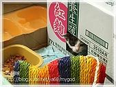 貓咪寫真‧剛撿到的哞哞:DSC01755.JPG
