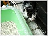 貓咪寫真‧剛撿到的哞哞:DSC01757.JPG