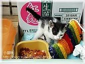 貓咪寫真‧剛撿到的哞哞:DSC01762.JPG