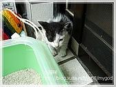 貓咪寫真‧剛撿到的哞哞:DSC01798.JPG