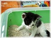 貓咪寫真‧剛撿到的哞哞:DSC01809.JPG