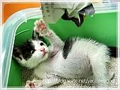 貓咪寫真‧剛撿到的哞哞:DSC01812.JPG