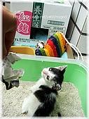 貓咪寫真‧剛撿到的哞哞:DSC01817.JPG