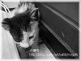 貓咪寫真‧剛撿到的哞哞:DSC01827.JPG