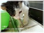 貓咪寫真‧剛撿到的哞哞:DSC01829.JPG