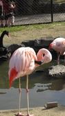 2013.4.21~4.22湯布院&別府地獄之旅:鬼山地獄養的紅鶴