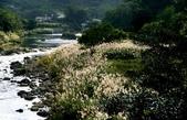 瑞芳-基隆河(一):基隆河一08.jpg
