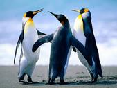刀劍神域:Penguins.jpg