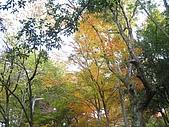 971118日本關西:郡上八幡城 (12) (640x480).jpg