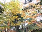 971118日本關西:郡上八幡城 (13) (640x480).jpg