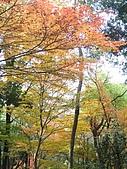 971118日本關西:郡上八幡城 (14) (480x640).jpg