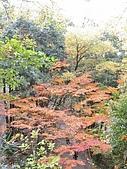 971118日本關西:郡上八幡城 (15) (480x640).jpg