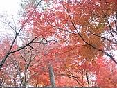 971118日本關西:郡上八幡城 (16) (640x480).jpg