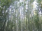 971120日本關西:嵐山 (5) (640x480).jpg