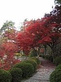 971118日本關西:郡上八幡城 (20) (480x640).jpg