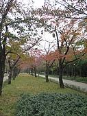 971121日本關西:大阪城公園 (1) (480x640).jpg