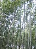 971120日本關西:嵐山 (6) (480x640).jpg