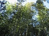 971120日本關西:嵐山 (7) (640x480).jpg