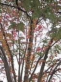 971121日本關西:大阪城公園 (7) (480x640).jpg