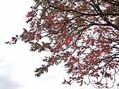 971121日本關西:大阪城公園 (8) (640x480).jpg