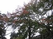 971117日本關西:彥根城 (8).jpg