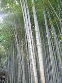 971120日本關西:嵐山 (14) (480x640).jpg