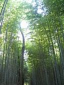 971120日本關西:嵐山 (15) (480x640).jpg