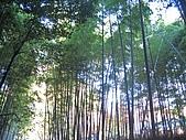 971120日本關西:嵐山 (16) (640x480).jpg