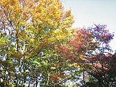 971120日本關西:嵐山 (17) (640x480).jpg