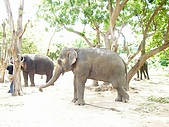 970517-22泰國自助行之pattaya的木雕之城:P5200324.JPG
