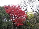 971118日本關西:郡上八幡城 (4) (640x480).jpg